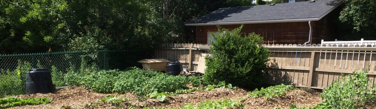 SoilMatrix Garden – Summer 2016